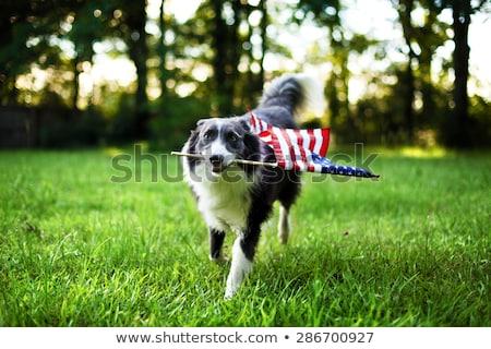 negyedike · nap · kutya · jack · russell · ünnepel · ünnepek - stock fotó © lightsource