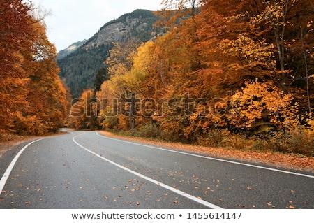 Stock fotó: ősz · út · égbolt · erdő · természet · levél