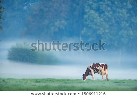 Misty prairie aube paysage printemps herbe Photo stock © Juhku