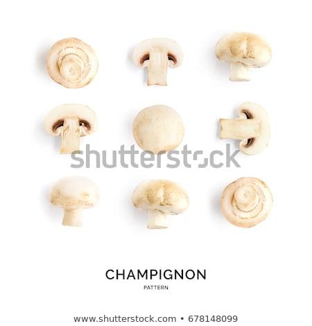 Top View of a Fungus / Mushroom Stock photo © mroz