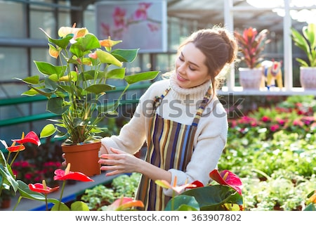 Lovely happy young woman gardener choosing flower pot with anthuriums Stock photo © deandrobot