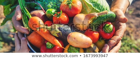 Menina frutas frescas legumes ilustração comida corpo Foto stock © adrenalina