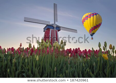 hot air balloons at tulip field in oregon stock photo © davidgn