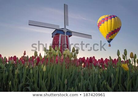 Forró levegő léggömbök tulipán mező Oregon Stock fotó © davidgn