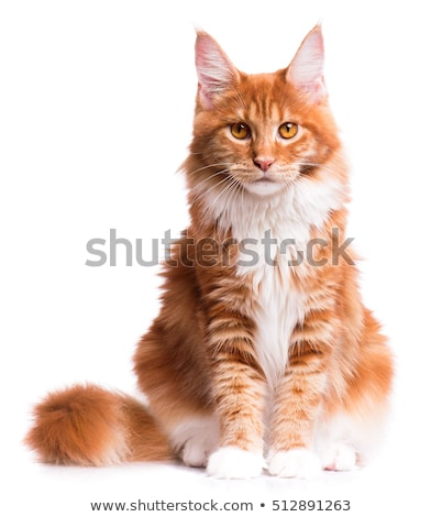 öreg narancs macska portré házimacska ül Stock fotó © simply