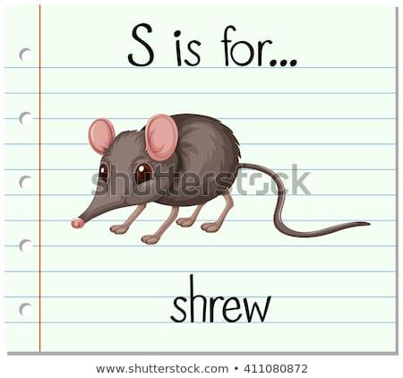 Flashcard letter S is for shrew Stock photo © bluering