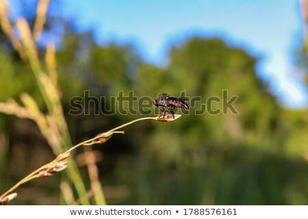 rablás · légy · szemek · fókusz · természet · háttér - stock fotó © pazham