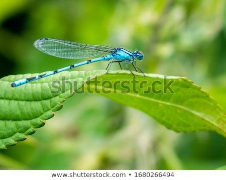 vad · levél · kék · folyó · szín · állat - stock fotó © pazham