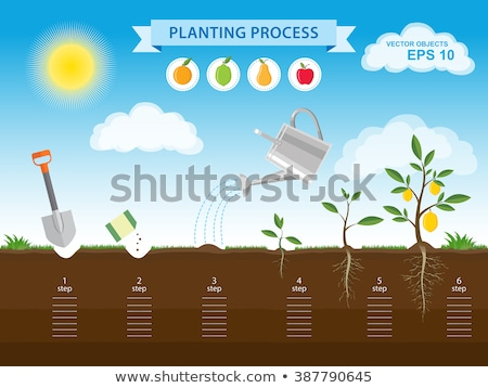 Cserepes növény körte gyümölcsök illusztráció étel kert Stock fotó © bluering