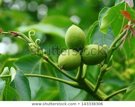 üç ağaç yeşil büyüyen doku Stok fotoğraf © FOTOYOU