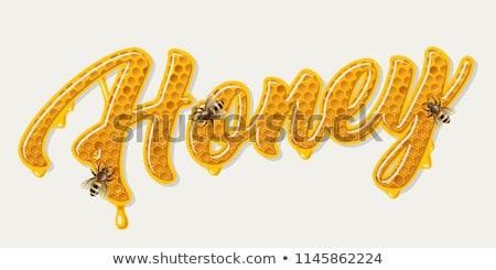Wort Design Bienen Illustration Natur Garten Stock foto © bluering
