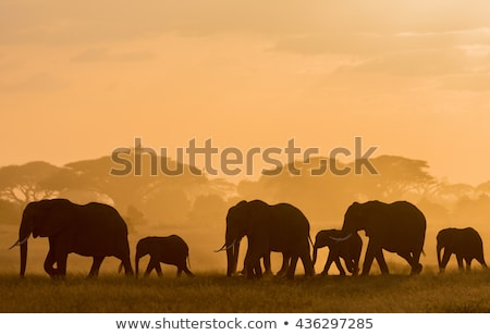 afrikai · elefántok · sétál · park · Kenya · fű - stock fotó © saddako2