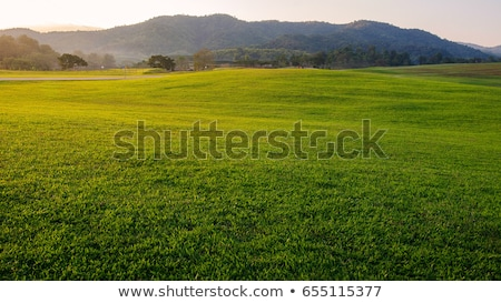 autumn grass background stock photo © wildman