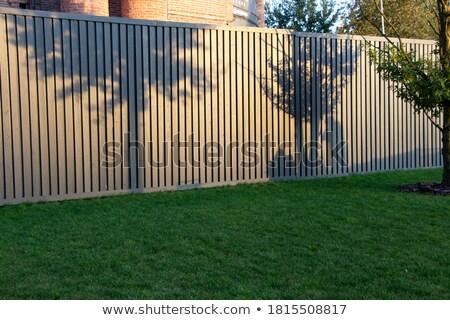 Ombra due persone erba donna giardino tempo libero Foto d'archivio © IS2