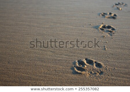 dog paw print in sand stock photo © 5xinc