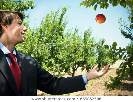 Man catching falling apple in orchard. Stock photo © IS2