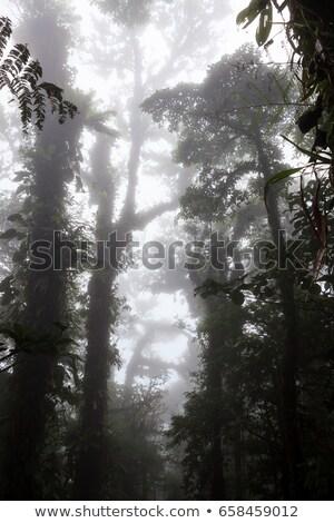 глубокий · пышный · туманный · леса · Коста-Рика - Сток-фото © juhku