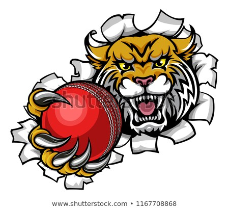 Wildcat Holding Cricket Ball Mascot Stock photo © Krisdog