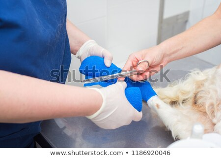 Veterinary healthcare professional holding puppy dog leg in hand Stock photo © ilona75