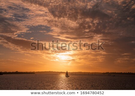 swan and fiery sunset stock photo © givaga