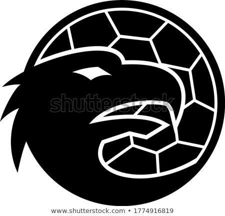 European Handball Eagle Mascot Stock photo © patrimonio