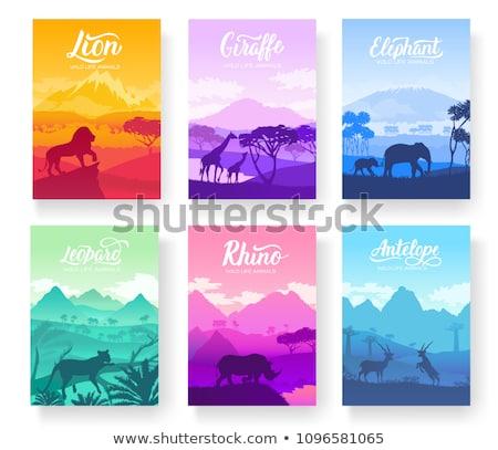 Yaban hayatı gün safari kavramlar ayarlamak vahşi hayvanlar Stok fotoğraf © cienpies