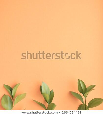 Peach · arbre · plein · fraîches · nouvelle - photo stock © marylooo