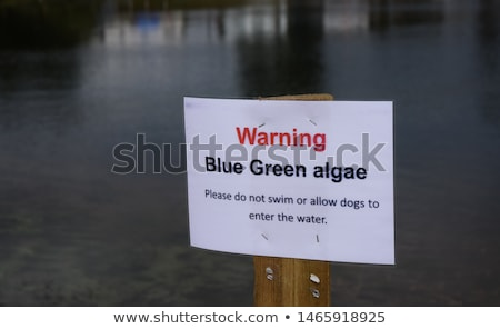 texture of green algae  Stock photo © taviphoto