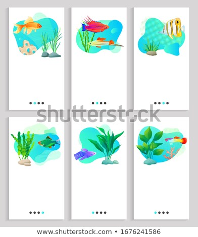Aquaristics Seaweed and Floral Decor Fish Floating Stock photo © robuart