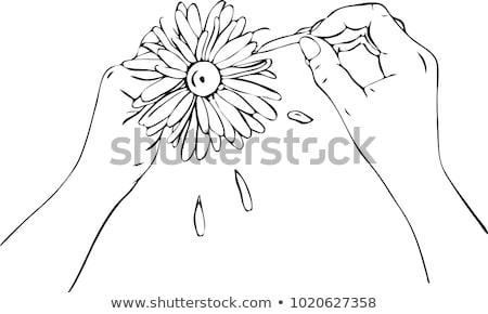 Feminino camomila margaridas vetor Foto stock © robuart