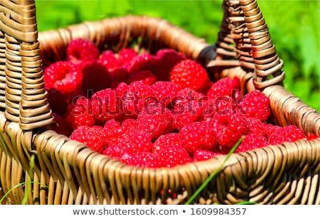 Ripe raspberry Stock photo © karandaev