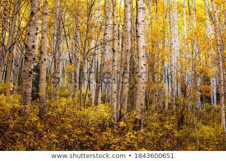 Bosje bomen voorjaar blauwe hemel witte wolk Stockfoto © pancaketom