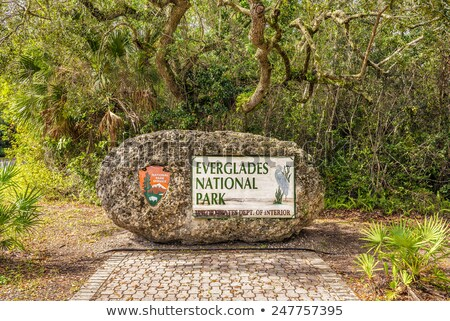 vegetazione · parco · Florida · USA · natura · alberi - foto d'archivio © phbcz