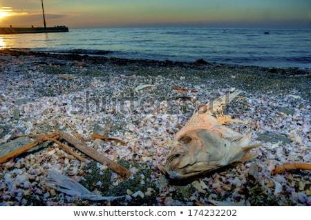 Dead Fish at Salton Sea Stock photo © emattil