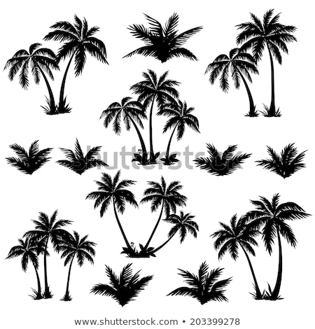 Stock photo: Palm forest silhouettes