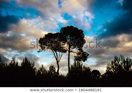Stormy Sky backlights trees Stock photo © emattil