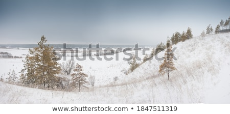 Forest Covered Hills Stock photo © jkraft5