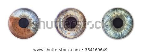 3D · medische · illustratie · oog · abstract · ontwerp - stockfoto © arenacreative