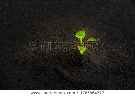 Kicsi zöld hajtás föld izolált fehér Stock fotó © Mikko