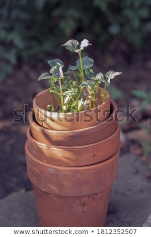 jardiniere , pots Stock photo © muang_satun