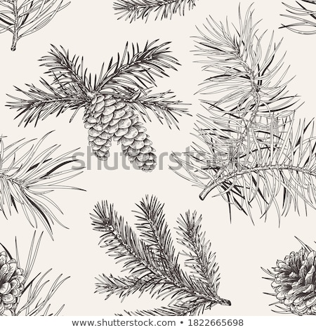 Stock photo / Stock vector illustration : Green branch of pine-tree
