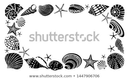 Sea snail in shell Stock photo © Hofmeester