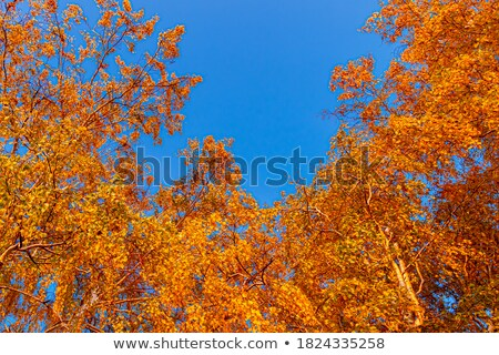 tree branches against blue sky stock photo © nejron