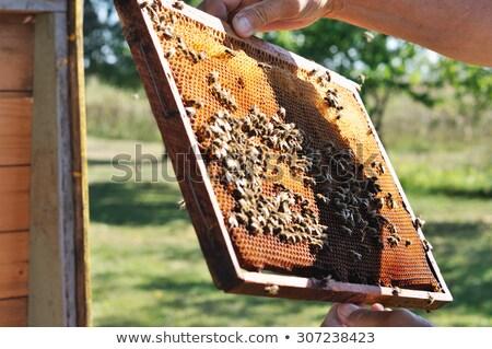 makró · friss · méz · üveg · bögre · fa · asztal - stock fotó © jonnysek