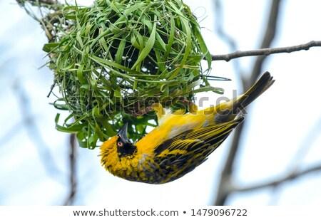 Geel · gebouw · nest · vergadering · boom - stockfoto © JFJacobsz