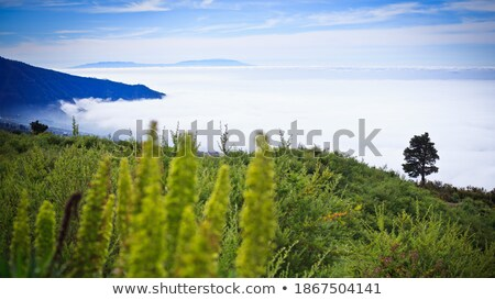 Lonely tree on volcanic mountains. Tenerife, Spain Stock photo © Steffus