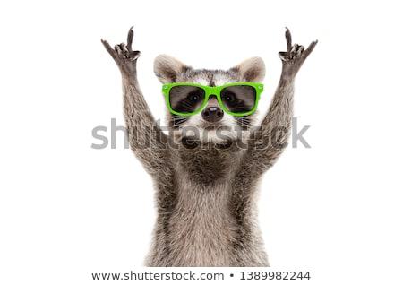 Party Animal Stock photo © macropixel