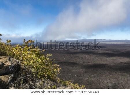 scenic landscape at volcanic area of Sierra Negra  Stock photo © meinzahn