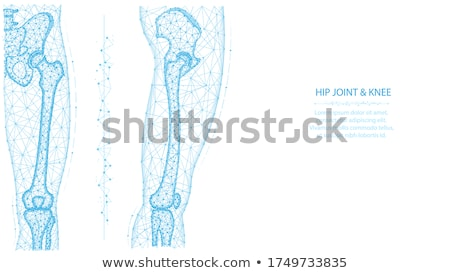 normal joint anatomy abstract blue design stock photo © tefi