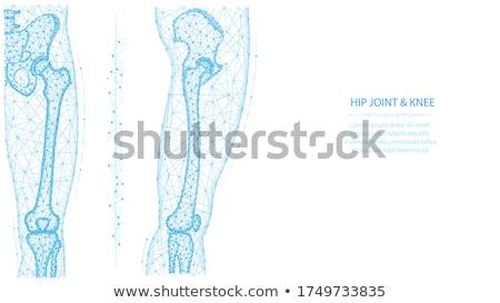 Сток-фото: нормальный · совместный · анатомии · аннотация · синий · дизайна